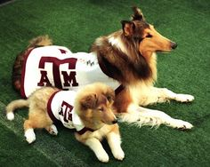 Reveille and Trainee Picture at Texas A