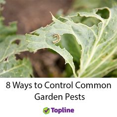 It's peak season for caterpillars, snails and aphides. Get them under control with our 8 easy techniques