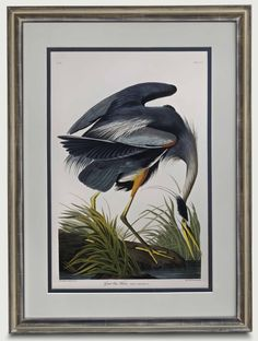Mason Work, Maria Martin, Elephant Size, Field Museum, Birds Of America, John James Audubon, Landscape Background, Blue Heron, Museum Collection