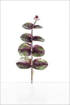 © Beetles & Huxley 2013 A silver, yellow gold and green and purple enamel brooch, of eucalyptus leaf. Contemporary Jewellery, Modern Jewelry, Fine Jewelry, Unusual Jewelry, Jewelry Tree, Green And Purple, Bracelets, Plant Leaves, Jewelry Design