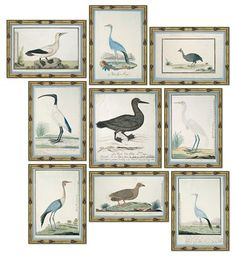 Soicher Marin - S/9, Bird Studies | One Kings Lane Painting Frames, Painting Prints, Modern Tropical, Bird Species, One Kings Lane, Giclee Print, Picture Frames, Gallery Wall, Study