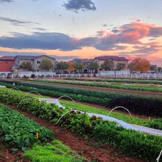 Have you seen Gilbert's #Agritopia yet? Beautiful photo of the neighborhood taken by Joe Johnston on Instagram!
