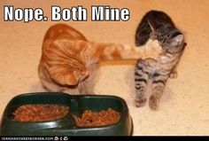 This photo is not of my cats, but it totally could have been.  Ollie, my chubby orange boy, was my eater and Abner sometimes couldn't get his fair share.