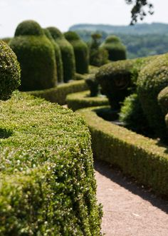 topiary path... takes an army to maintain, but that's a minor detail