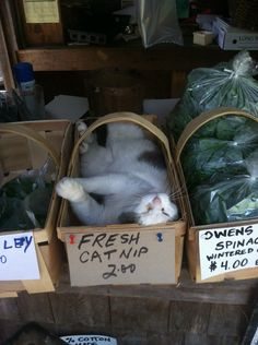 "The sign should read ""fresh catnap"" instead of ""fresh catnip"""