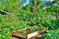 A raised bed garden with a bean pole tipi is a great way to use your vertical space as well, and increase your growing area! ~ Easy Edible Landscapes Miami