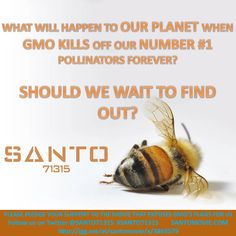 Santo How To Find Out, How To Become, Food Insecurity, What You Eat, Let It Be, Shit Happens, How To Plan, Ladybugs, Dragonflies
