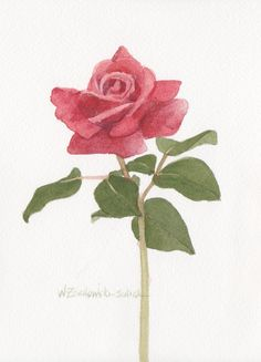 Red Rose 3 5 x 7 Original Watercolor by wandazuchowskischick