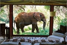 Makanyane Safari Lodge is a rustic but at the same time luxurious accommodation by the Marico River in Madikwe Game Reserve South Africa.