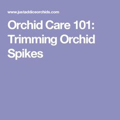 Orchid Care 101: Trimming Orchid Spikes