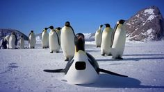 Watch Online: David Tennant Narrates Penguins: Spy In The Huddle Part 1
