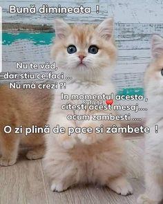 Cats, Wish, Good Morning, Gatos, Cat, Kitty, Kitty Cats