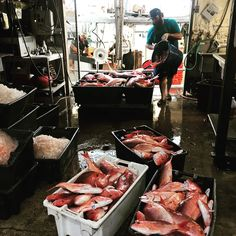 Fresh off the boat wild caught RedSnapper. Seafood Online, Seafood Market, Fresh Off The Boat, Fresh Seafood, Delish