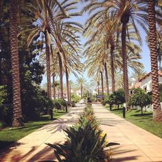 Palm tree corridor.