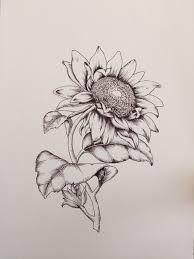 sunflower botanical drawing에 대한 이미지 검색결과