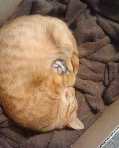 Science Discover Cat Guarding Her Baby cute animals cat cats adorable animal kittens pets kitten funny animals Cute Funny Animals Funny Animal Pictures Funny Cats Random Pictures Mom Funny Funniest Animals Food Pictures Animal Pics Funniest Pictures Cute Kittens, Cats And Kittens, Cute Funny Animals, Funny Animal Pictures, Funny Cats, Random Pictures, Mom Funny, Animal Pics, Funniest Animals