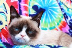 The Daily Grump | August 5, 2013