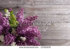 Стоковые фотографии и изображения цветы сиреневые | Shutterstock