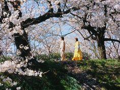 Dolls / Takeshi Kitano / 北野武