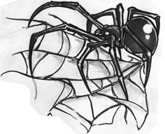 Black Spider Tattoo Design