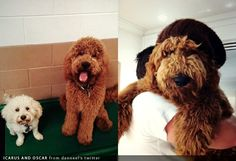 Jensen Ackles dogs Icarus and Oscar