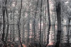 Creative Flyer Design, Creative Flyers, Creve Coeur Lake, Infrared Photography, Design Inspiration, Design Ideas, Serenity, Woodland, Reflection