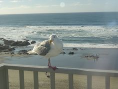 Lincoln City, OR : Our Feahter Friends visit ABalcony at The Coho Inn