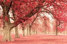 I'd love to take a walk here