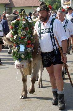 Allgäu: Viehscheid in Wertach. Im Allgäu heißt der Almabtrieb Viehscheid, ein großes Fest. Die Tiere, in Wertach ca. 700, sind festlich geschmückt.