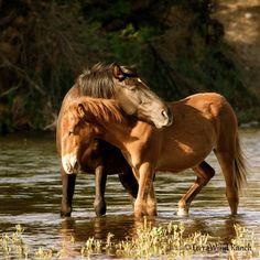 How horses hug and say I love you!