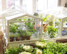 IKEA Socker - Indoor Miniature Greenhouse