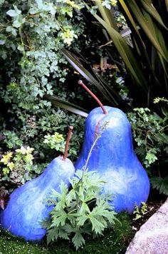 Giant blue pears!! In Tina Dixon's garden