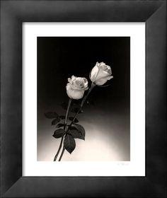 AllPosters - Roses  Art Print - 41 x 51 cm  Dick & Diane Stefanich