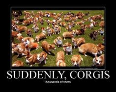 Corgis!!!!!!!!!!! Oh my god. I would hit my knees and have a heart attack. So much cute!