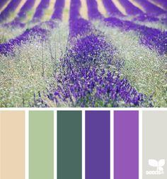 field hues