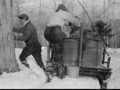 15 Sweet Vintage Snapshots of Making Maple Syrup - Modern Farmer Modern Farmer, Sugaring, Maple Tree, Collie Dog, Community Events, Art Reference Poses, Maple Syrup, Good Old, Vintage Photos