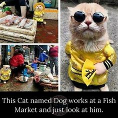 Animal Jokes, Funny Animal Memes, Funny Animal Pictures, Cat Memes, Cute Little Animals, Cute Funny Animals, Funny Cute, Cute Cats, Hilarious