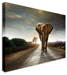 Elephant Charge by Abstract Art Canvas Printers, Canvas Art Cheap Prints by www.canvastown.co.uk