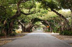 Historic Old Cutler Road in Coral Gables, Florida