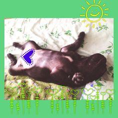 Sleeping pug!