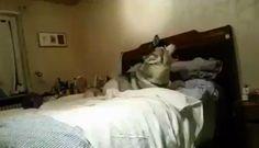 Propeller Husky. http://ift.tt/2d9XDJh