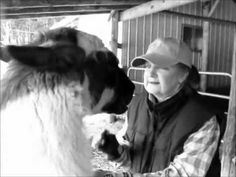 A brief visit with Llamas in the Raw