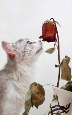 Flower Smelling Cat
