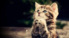 funny-cats-animals-praying-art.jpg (2560×1440)