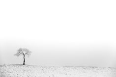 Just a tree. In a field. With some fog. What do you think? #tree