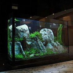 21 Best Aquascaping Design Ideas to Decor Your Aquarium - Tips Inside - homelovers Planted Aquarium, Aquarium Terrarium, Aquarium Aquascape, Nature Aquarium, Home Aquarium, Saltwater Aquarium, Aquarium Fish Tank, Freshwater Aquarium, Big Aquarium