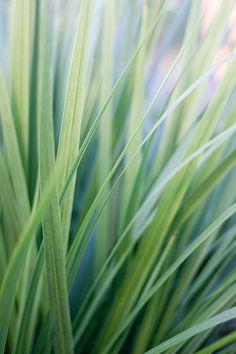 Verde suave | Soft green | Flickr - Photo Sharing!