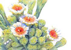 Saguaro Cactus Flowers8x10Print of Orig.Watercolor by TwistofColor