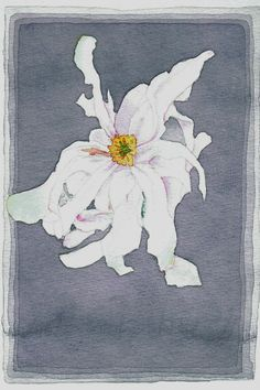 Magnolia - Helen Reynolds Magnolia, Painting, Art, Art Background, Magnolias, Painting Art, Kunst, Paintings, Performing Arts