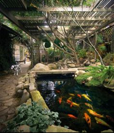 Beautiful koi pond! | http://www.greenturf.com/ LOOKS SO BEAUTIFUL, SITTING UNDER THE VINES & ENJOYING WATCHING THE AWESOME FISH, WOULD BE A WONDERFUL WAY, TO SPEND SPECIAL TIME, ALONE!